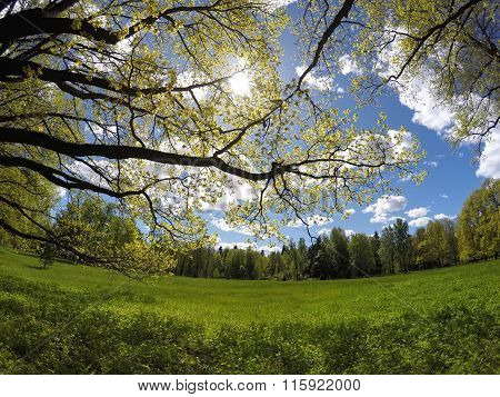 Beautiful bright summer landscape - the wood behind a meadow and branches of trees in the foreground