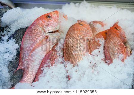 Fresh Whole Snapper Fish