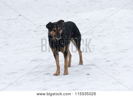 Lonely Homeless Dog Wandering In The Snow. Animals