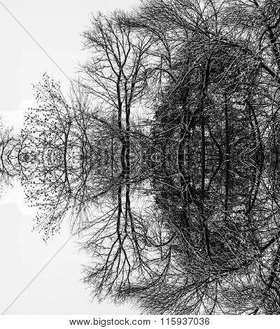 Trees In Symmetry Monochrome Landscape