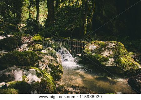 Clear Water Stream river in forest Landscape scenic view