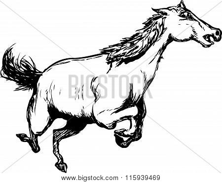 Outlined Wild Horse Running