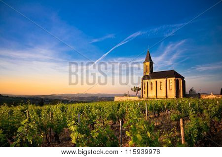 Twilights On Vineyards, Beaujolais, France