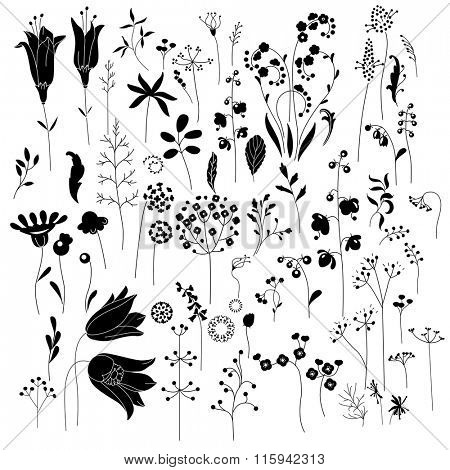 Collection of stylized herbs and plants.  Black and white silhouette. Pattern for your design, romantic greeting cards, announcements, posters.