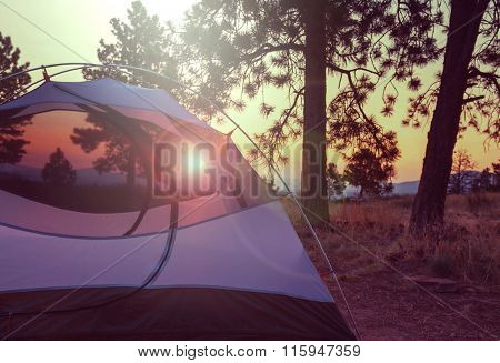 Tent in a forest campsite