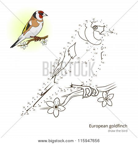 European goldfinch bird learn to draw vector
