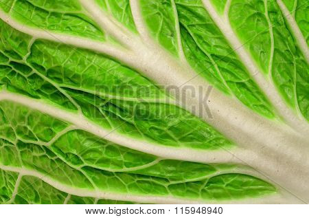 Background Closeup Of Juicy Leaf Chinese Cabbage
