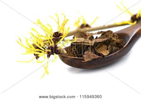 Flowering Witch Hazel (hamamelis) And Dried Leaves For Natural Cosmetics, Isolated On White