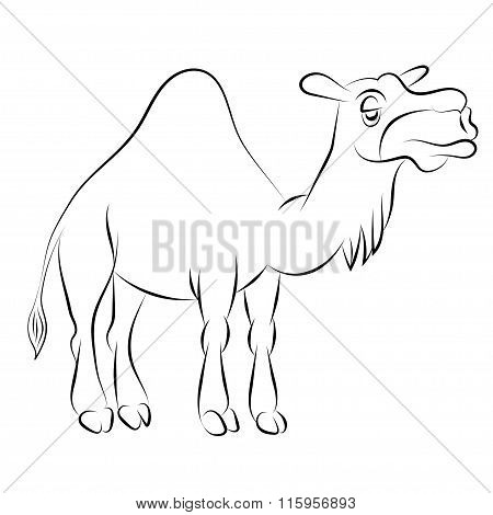 Illustration Of The Chewing Camel With One Hump Drawn With A Contour