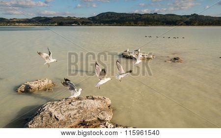 New Zealand Lake Rotorua