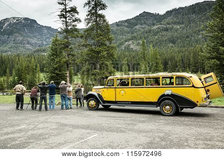 Yellow Bus Tour
