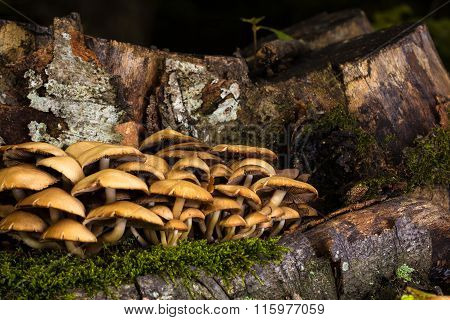 Mushrooms And Tree Stump