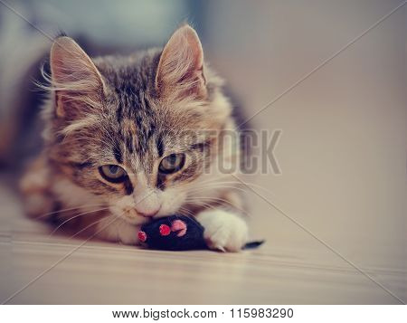 The Domestic Multi-colored Kitten Plays With A Toy.