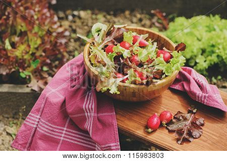 fresh farm home growth reddish and green salad in wooden plate with garden bed on background.
