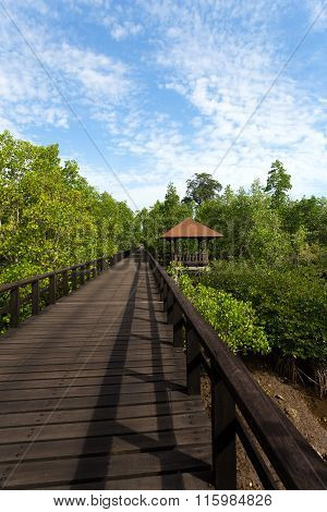 Indonesian Landscape With Mangrove And Walkway