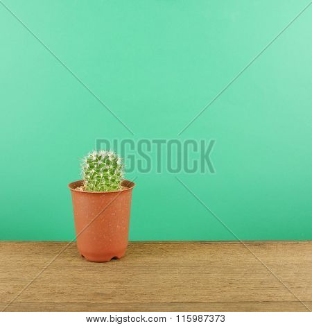 The little green cactus in small brown plant pot on brown wooden planks