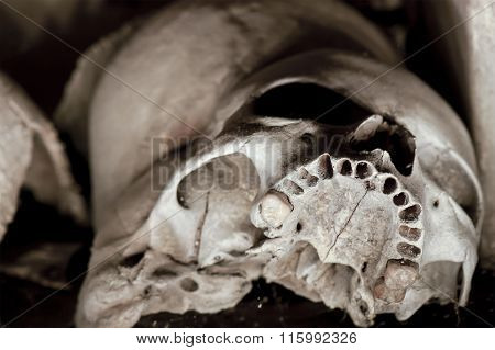 Skull Of Cemetery In Naples - Italy
