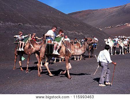 Camel Safari, Lanzarote.