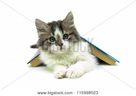 Kitten Lying Under A Book On A White Background