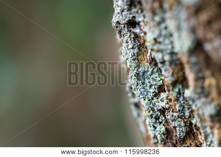 Moss On The Trunk With Space For Text