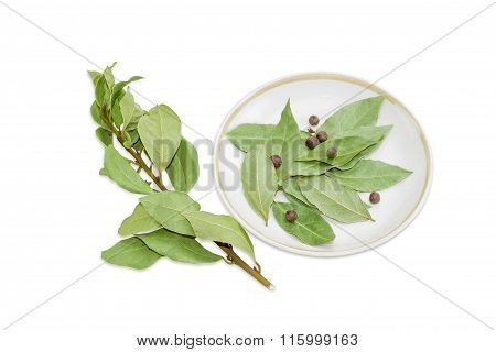 Branch Of Bay Laurel, Bay Leaves And Allspice On Saucer
