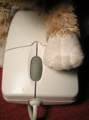 Toy Cat Paw And Computer Mouse poster