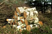 Lumber, Timber