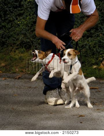 Control de cachorro