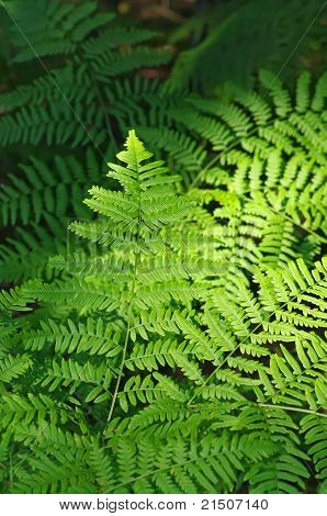 Background of a bright fern