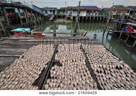 drying salty fish under the sun in the fishing village