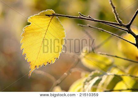 Las hojas de otoño cubierto de escarcha