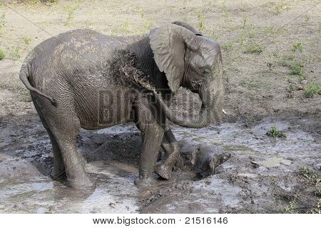 Having an Elephant Bath