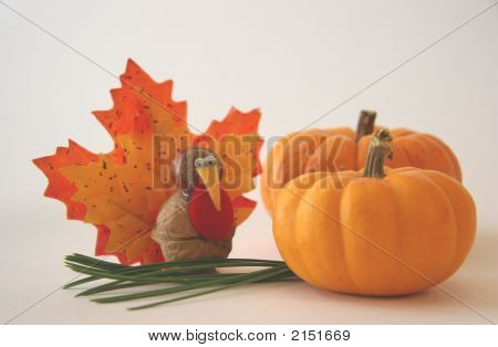 Tiny Turkey And Two Pumpkins
