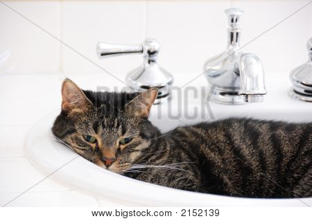 Cat In Bathroom Sink