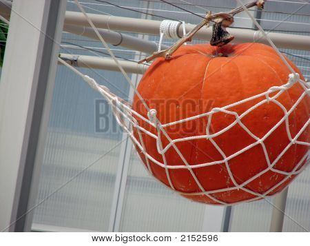 Pumpkin In A Net