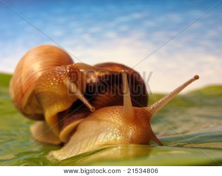 Two Funny Snails