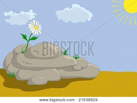 Flower on stones