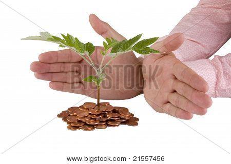 Empresário, protegendo a planta