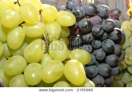 Bunch Of Mature Grapes 3