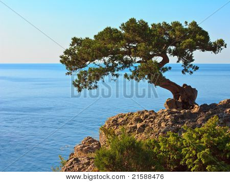The Tree On The Rock