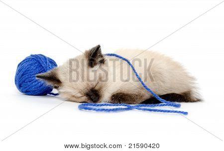 Cute Kitten With Blue Yarn