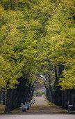 Autumn Scenery In Saint Petersburg, Russia poster