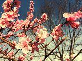bloom poster