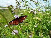 Butterfly Spreading Wings