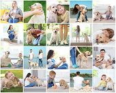 Collage with people and cute Labrador Retriever dogs poster
