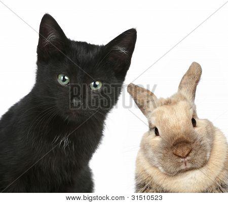 Black Cat And Rabbit. Close-up Portrait