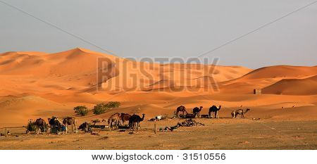 Stunning sand dunes