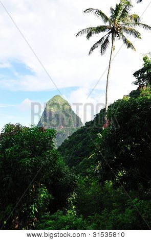 Petit Piton In The Background