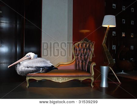 Pelican Relaxes at an Upscale Hotel