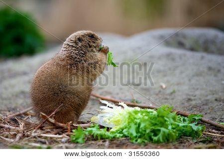 priairdog eating